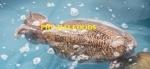 Chả mực Phú Hải (Loại I)